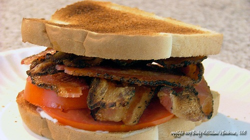 Bacon Tomato Sandwich