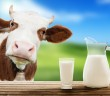 Dairy-Free Benefits - The Top 10 Reasons to Go Dairy Free - Animal Welfare, the Environment + Avoiding Added Hormones and Antibiotics